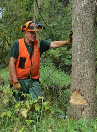 Chainsaw Safety Training includes proper notching